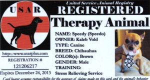 Speedy Therapy Certification